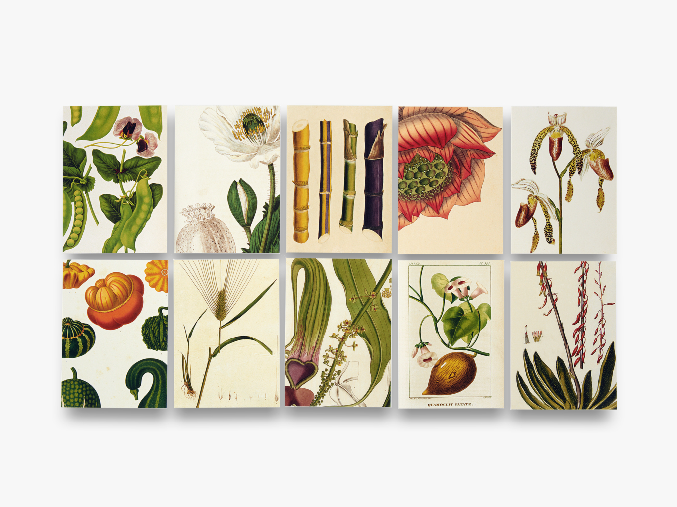 Remarkable Plants Box of 20 Notecards